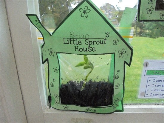 Sprout 1